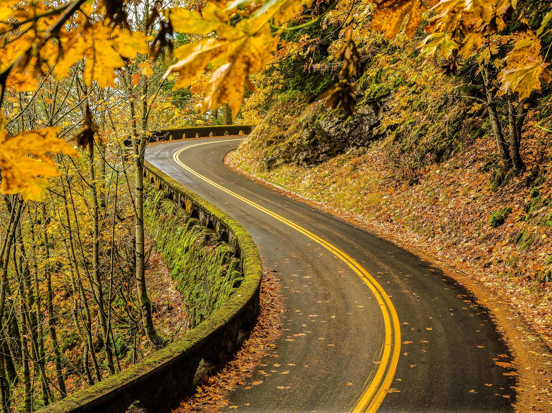 Oregon fall foliage