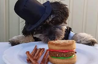Dog looking at burger