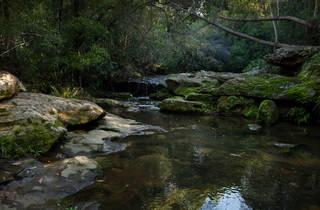 A pool at Ku-ring-gai Wildflower Garden