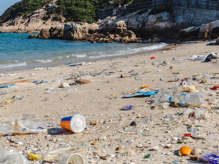 Join organisations offering beach cleanups