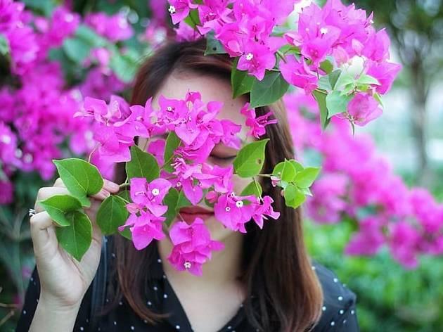 Cheirar flores