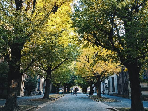 University of Tokyo stock photo