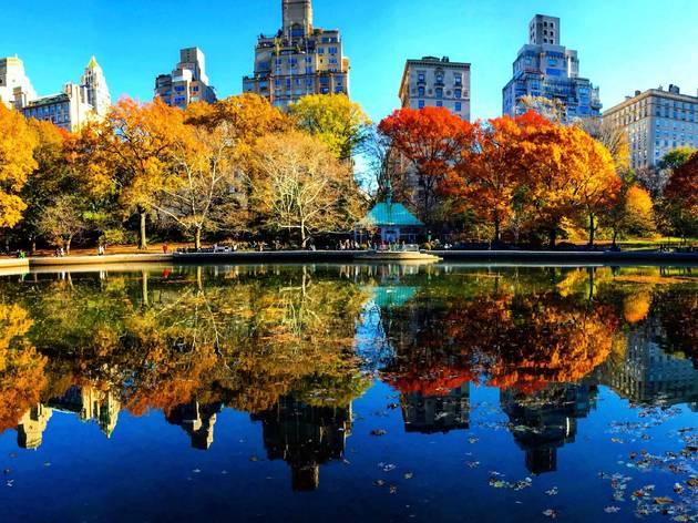 When to catch fall foliage in NYC
