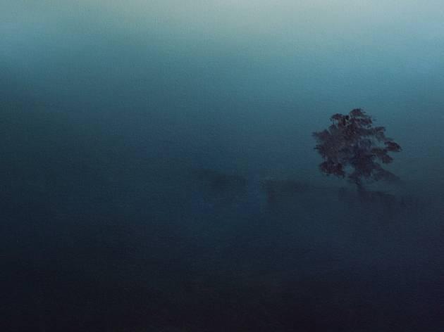 A ghostly tree set against a blue green hazy backdrop of bushfire smog