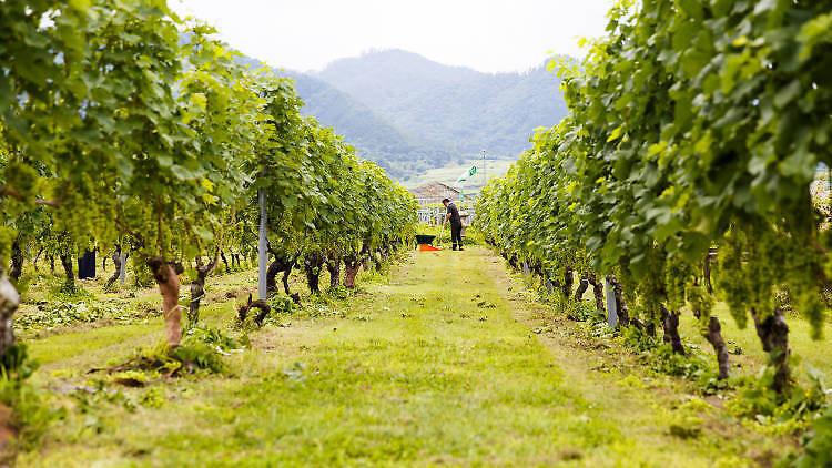 Château Mercian Katsunuma Winery