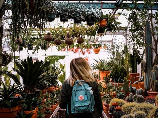 Sydney S 12 Best Plant Nurseries