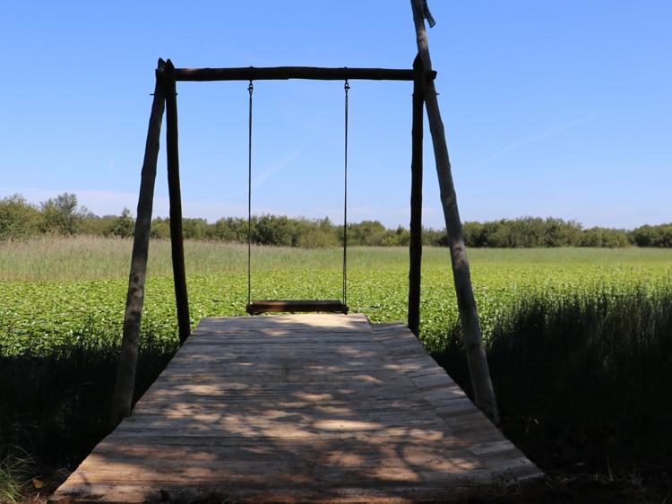 Baloiço da Lagoa da Pateira do Carregal (Aveiro)