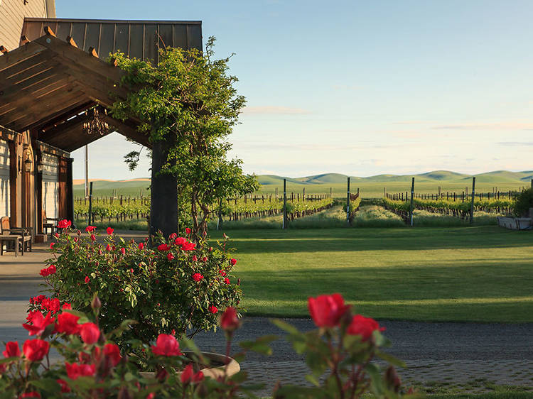 11 scenic West Coast wineries worth a trip