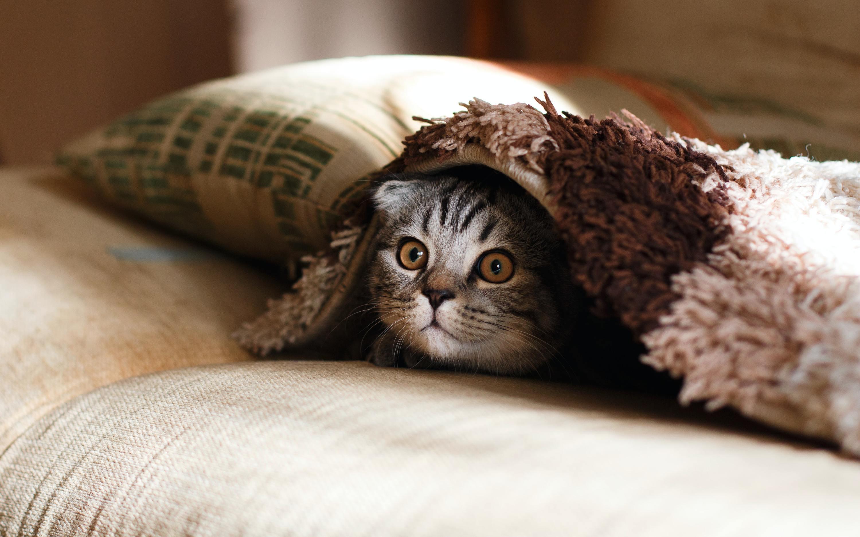 7 enfermedades comunes en gatos y cómo prevenirlas