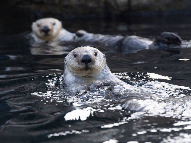 Here's how to snag free admission to the New York Aquarium