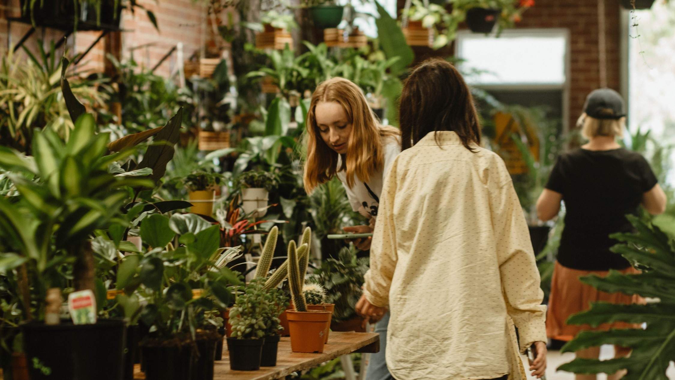Two women looking at a table covered in pot plants