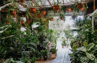 Botanicah
