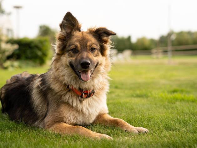 Happy dog on grass