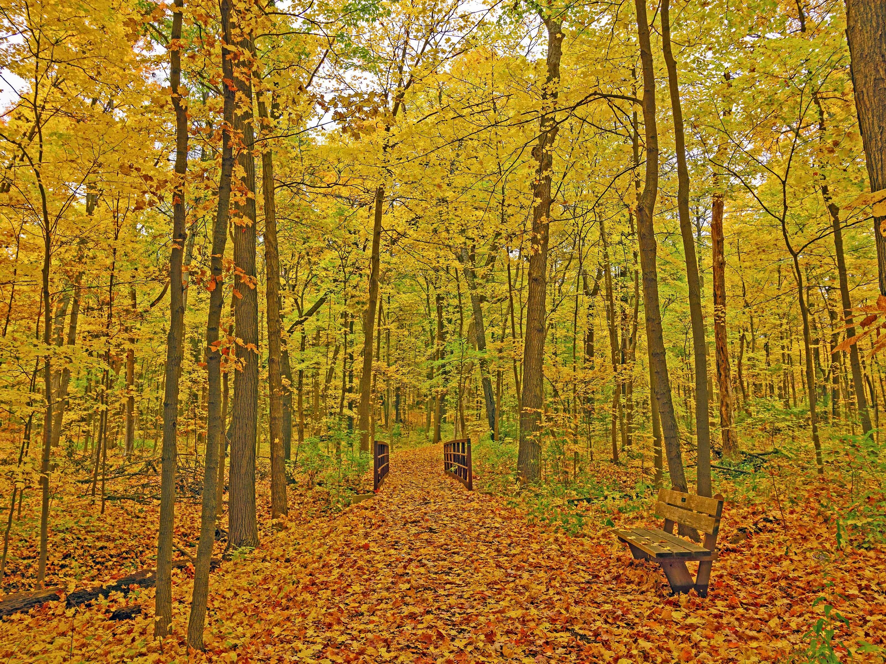 Morton Arboretum is offering guided 'forest therapy' walks for stress relief