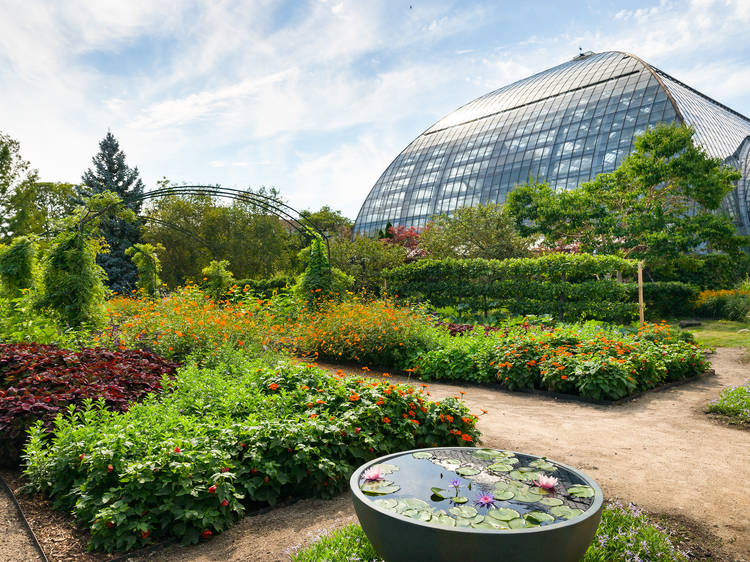 See the flowers that inspired Monet at Garfield Park Conservatory's new outdoor exhibit