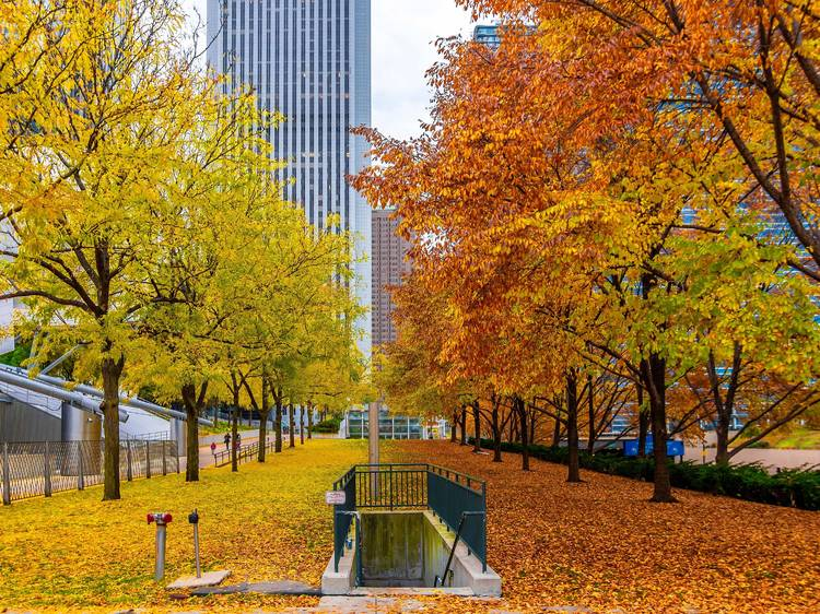 Check out the colorful display of fall foliage