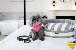 Small grey dog in pink sweater sits on hotel bed
