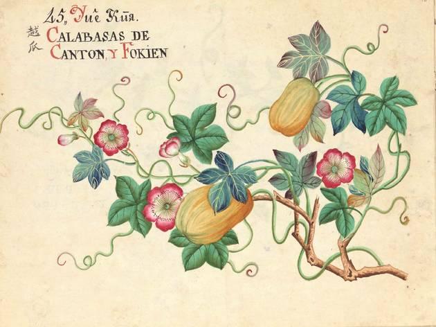 Dibujo de finales del siglo XVIII