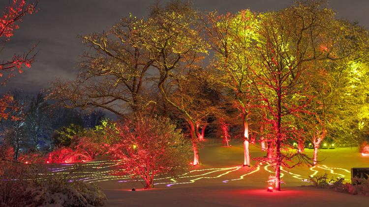 Moton Arboretum