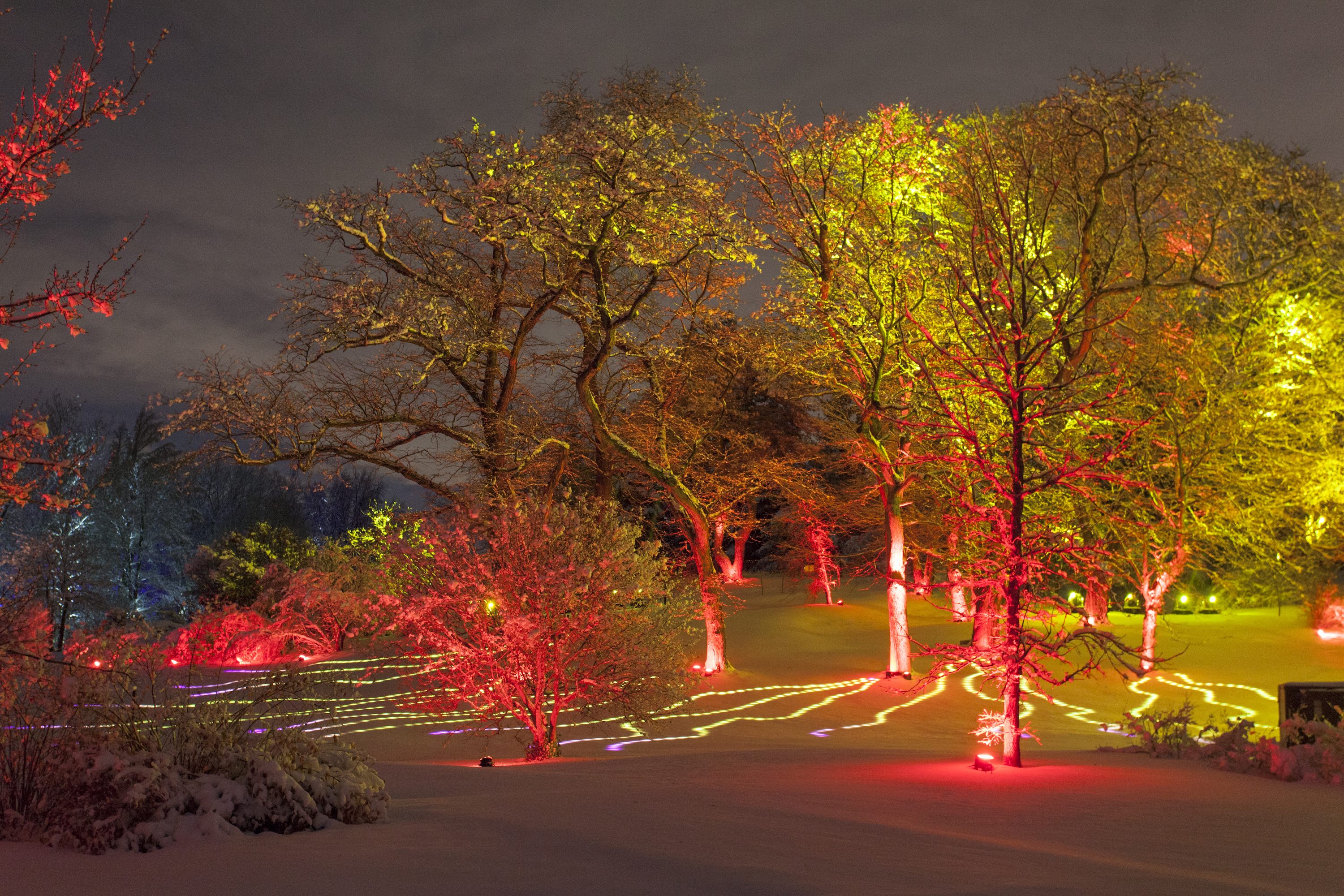 A drive-through lights display is coming to Morton Arboretum this fall