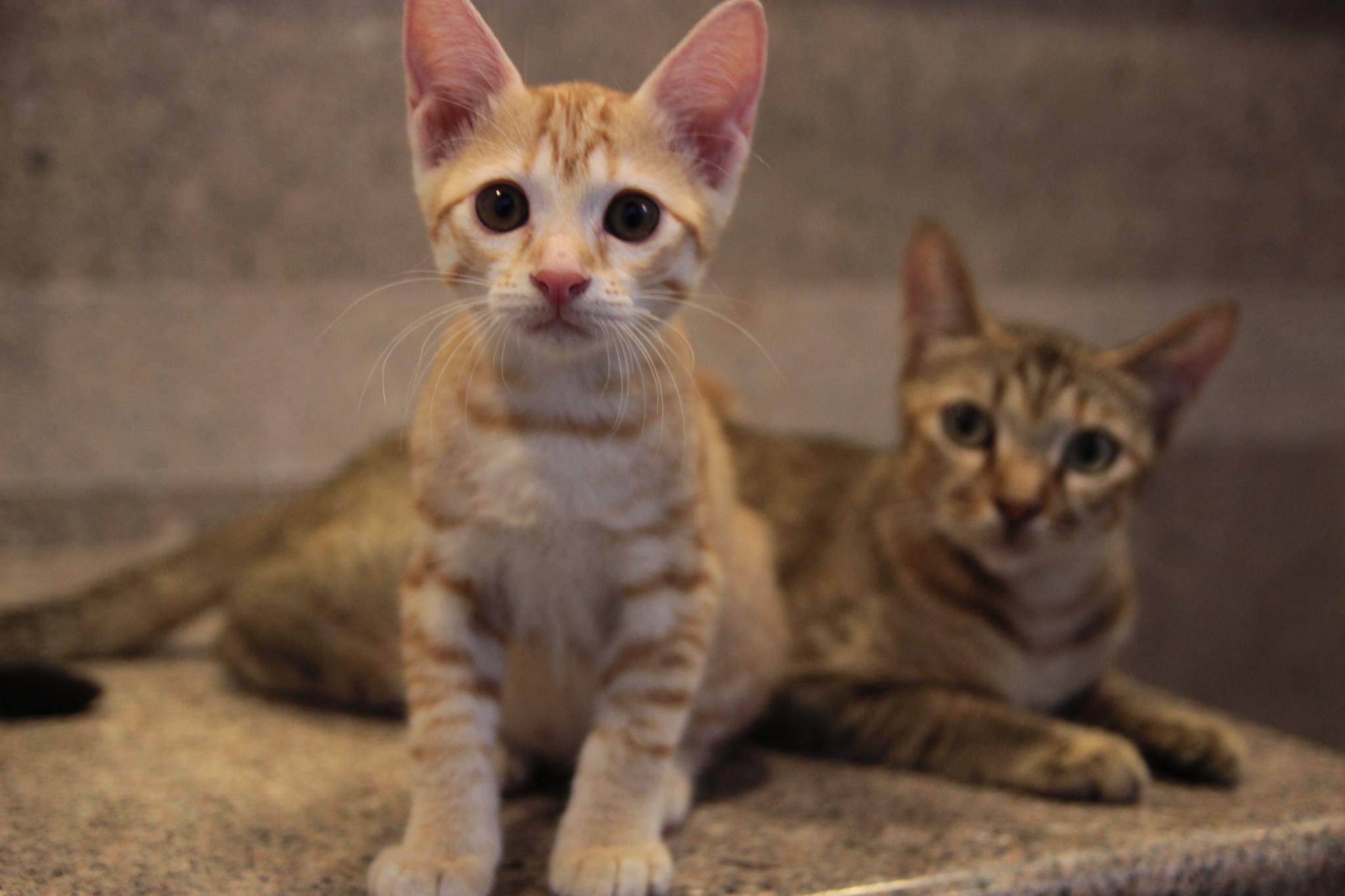 Keepcats