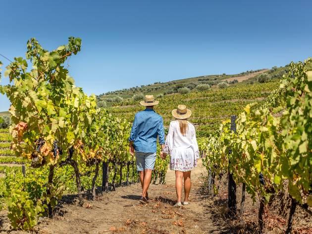 As vinhas do Casal dos Capelinhos