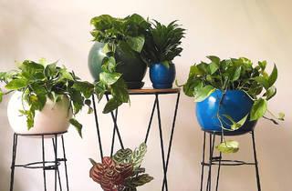 Plantify, plantas a domicilio