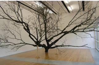 Arte, Nature Abhors a straight line de Gabriela Albergaria