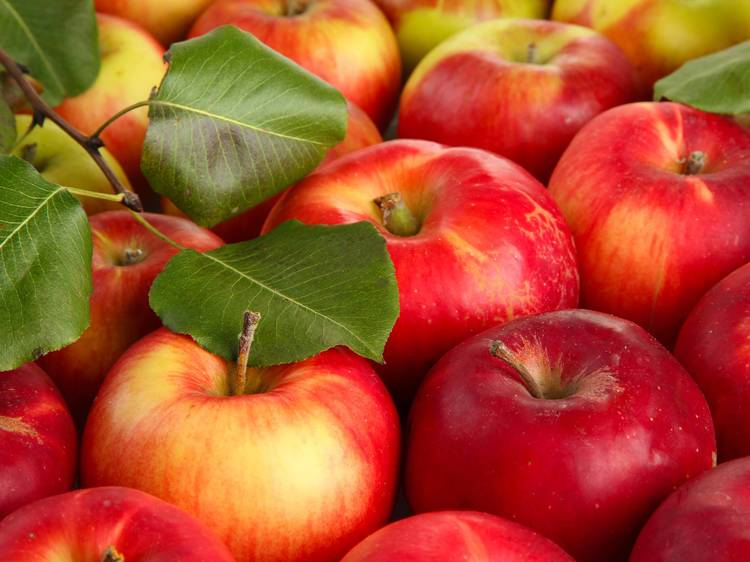 Sun High Orchard
