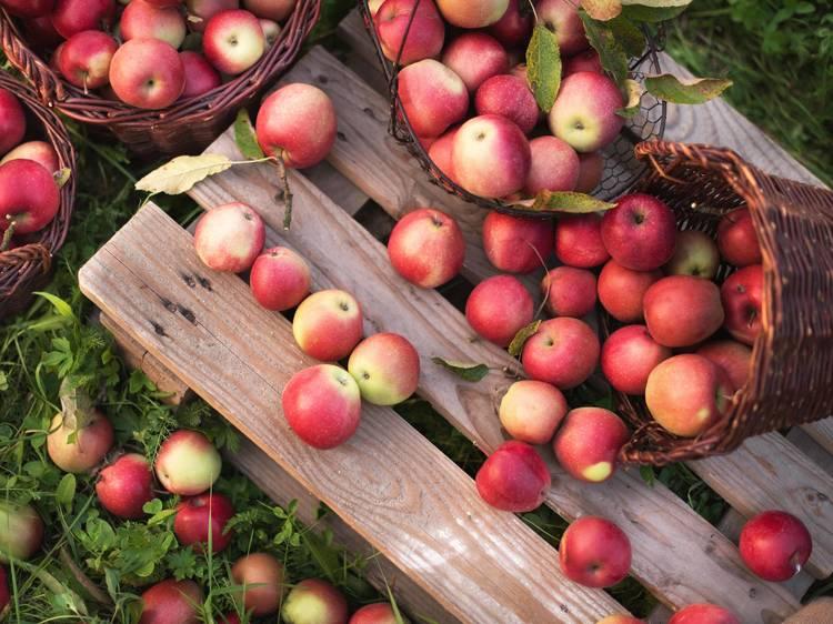 Bishop's Orchards
