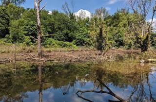Hampstead Wetlands Park