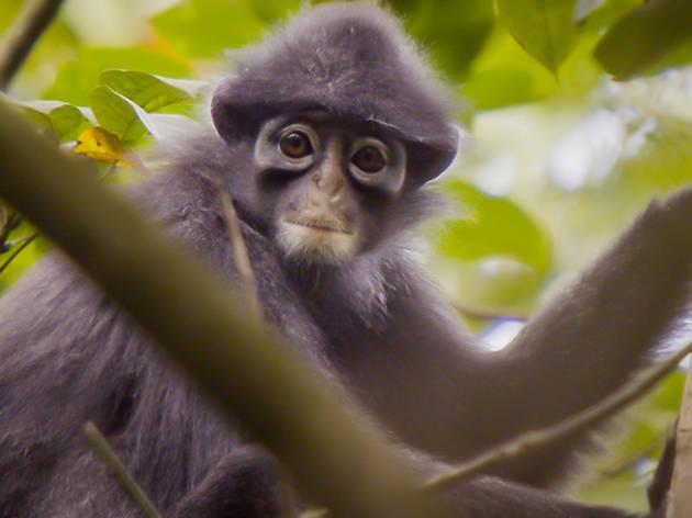 Florestas Secretas de Singapura com David Attenborough