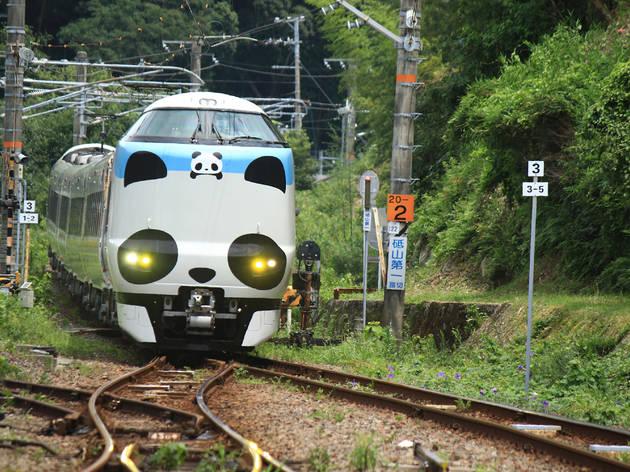 Panda Kuroshio