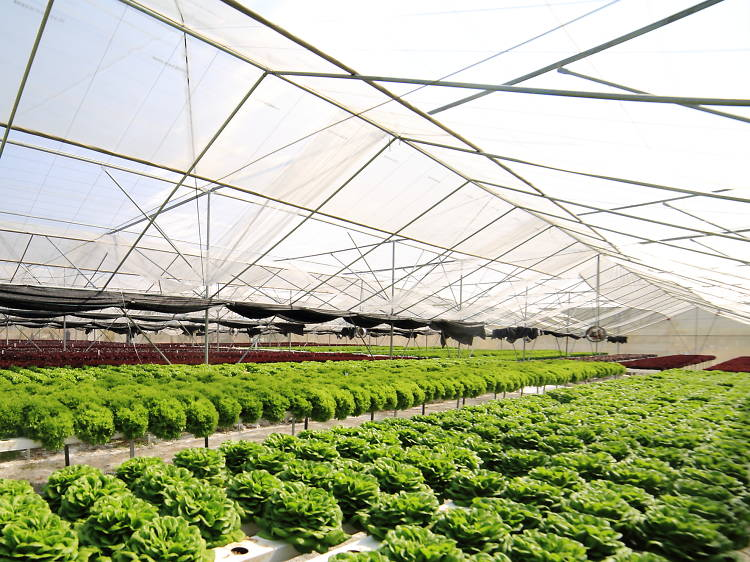 Aqua Green:新鮮水耕菜