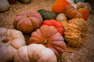 Mr. Jack O' Lanterns Pumpkins