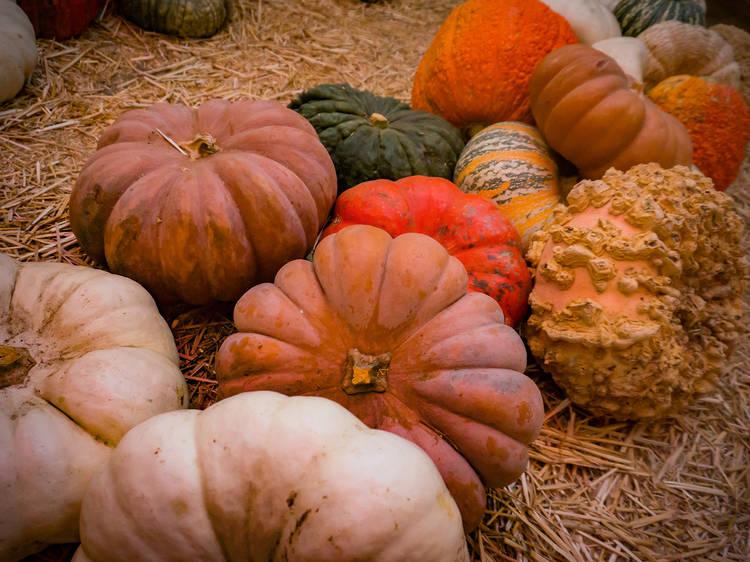 Mr. Jack O' Lanterns Pumpkin Patch