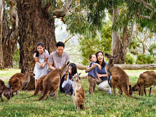 Family gather near kangaroos at Cleland Wildlife Park