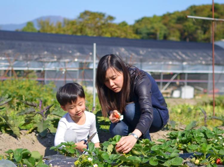 Fruitful Organic Farm