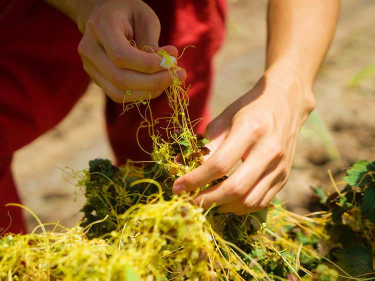 AuLaw Organic Commons