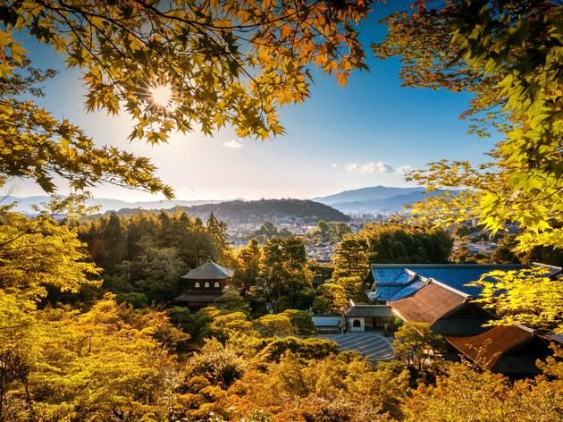 Japan autumn leaves 2020 forecast