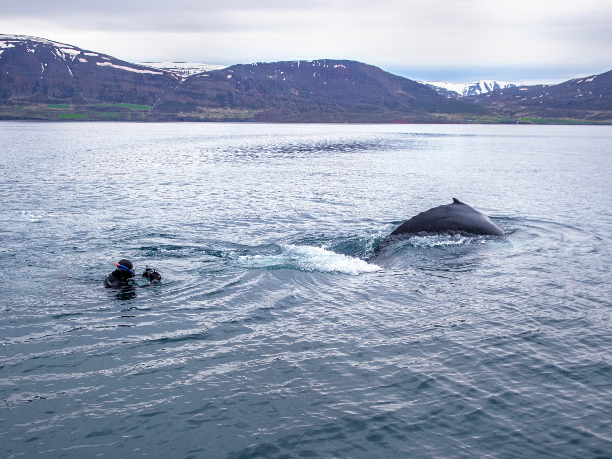 You can now swim with whales under the midnight sun in Iceland