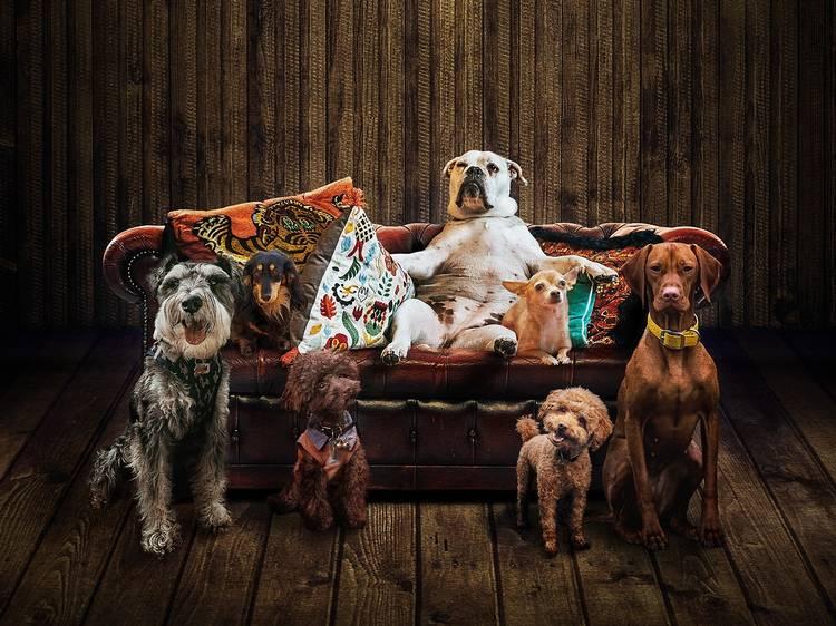Els gossos