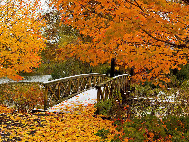 Admire brilliant fall colors at Graceland Cemetery