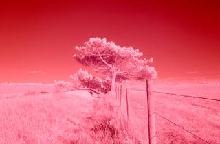 Red Lines with Landscapes: Portugal