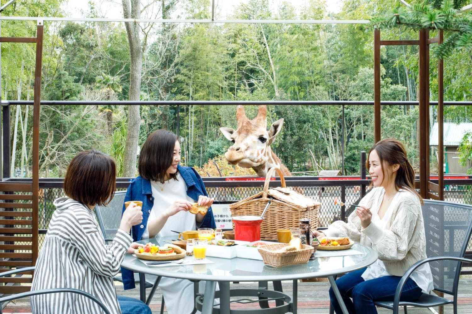 This new bamboo forest glamping site in Chiba has resident giraffes