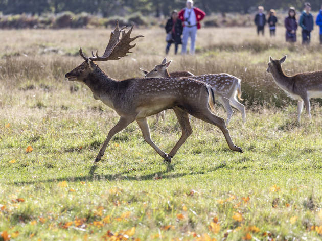 Watch out! It's rutting season, warns London's Royal Parks