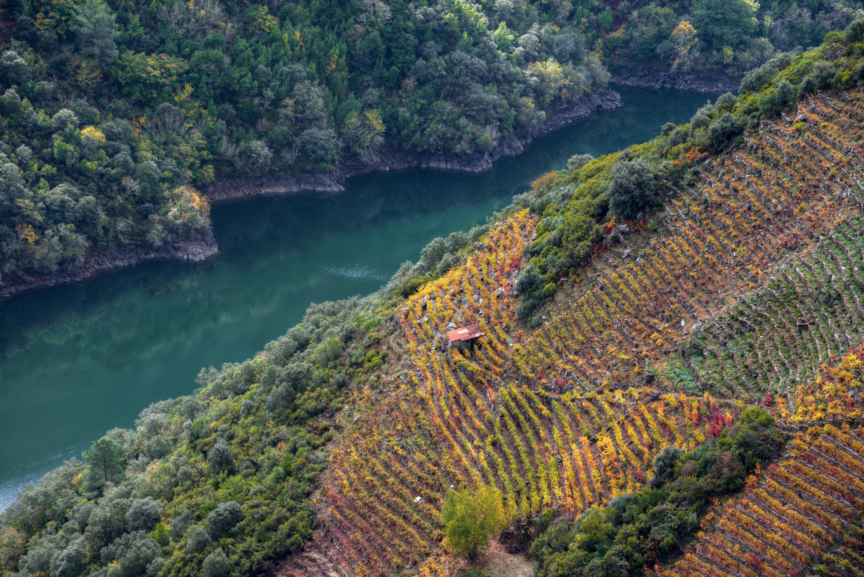 Riberia Sacra otoño