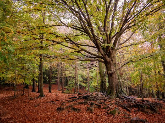 Parque Nacional del Montseny. Barcelona