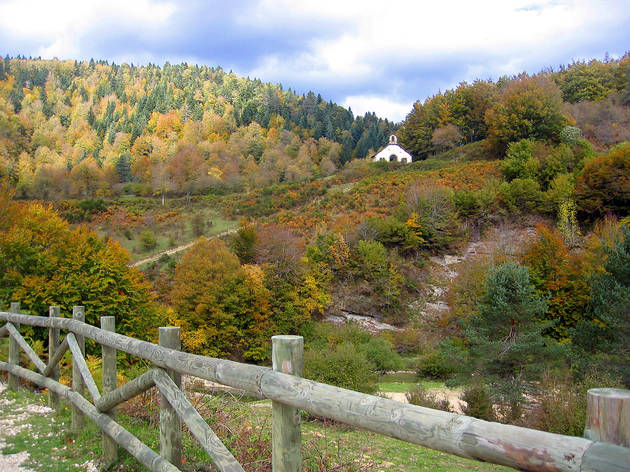 Selva de Irati. Navarra