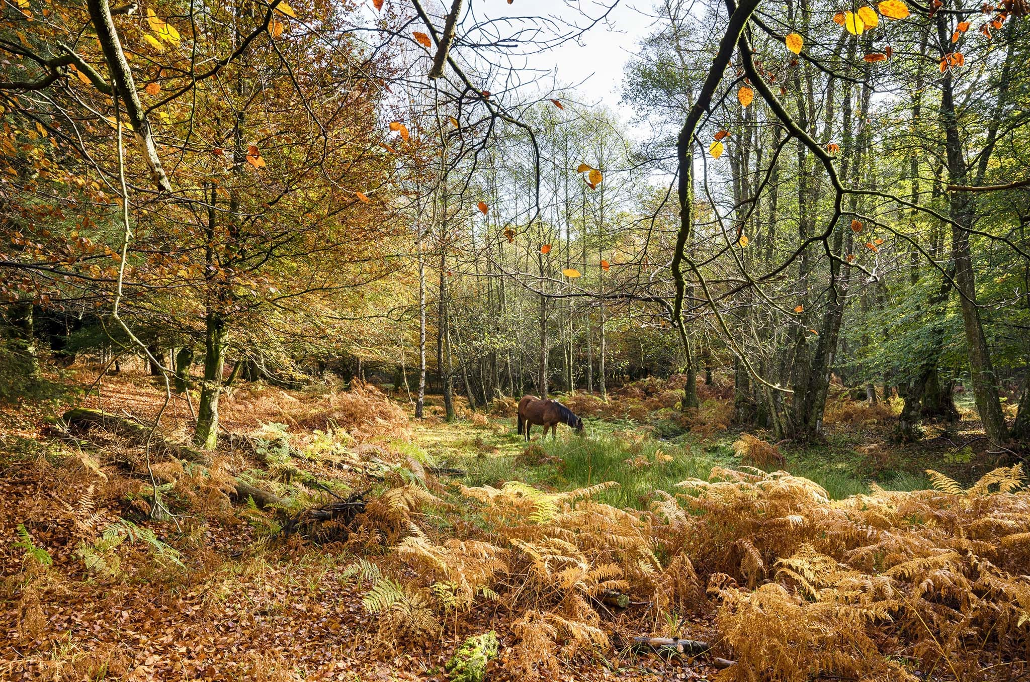 The 9 best places to see autumn leaves in the UK